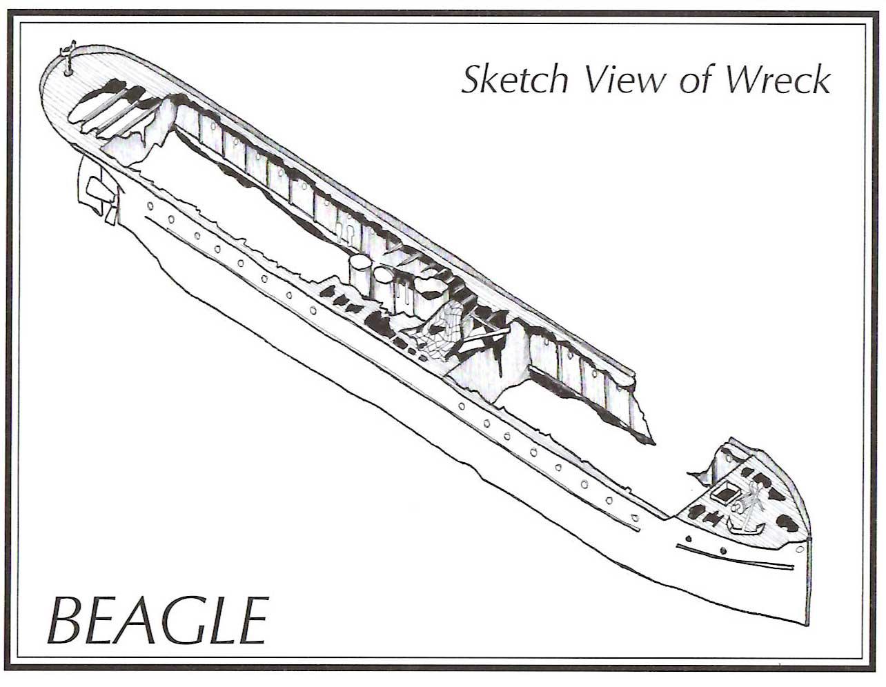 Beagle-3D