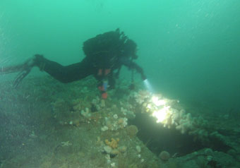 Diver explores the wreck.