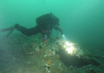 Diver explores the wreck.