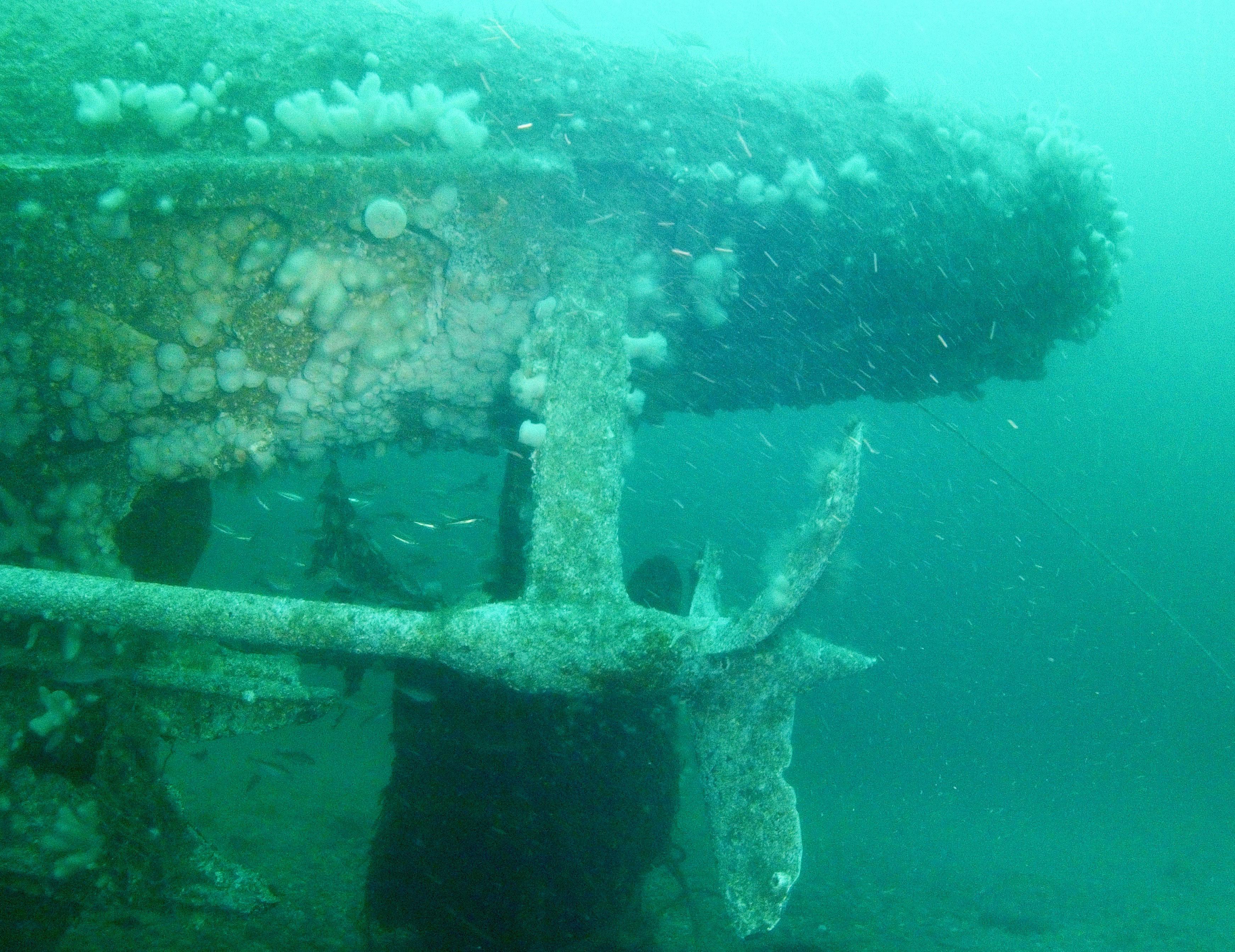 Dive-7